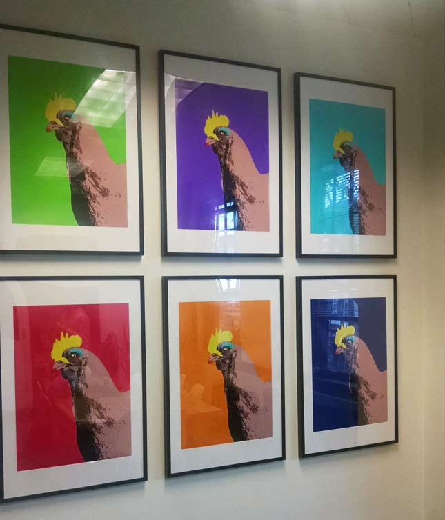 Chicken Pop Art at iCandy